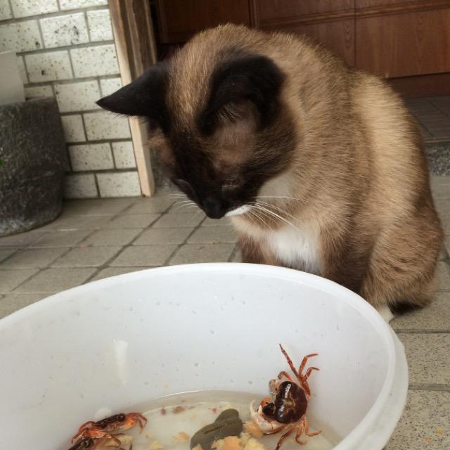 魚の目作業は一点集中猫背作業